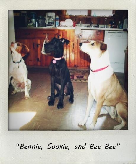 Bennie, Sookie, & Bee Bee